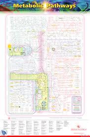 Iubmb Nicholson Metabolic Pathways Chart Metabolic Pathways Beleska Biohemija Medicina Docsity