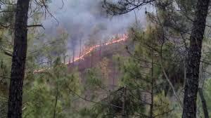 Image result for जंगल की आग