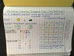 Mendelian Genetics Chart Pin On Life Science