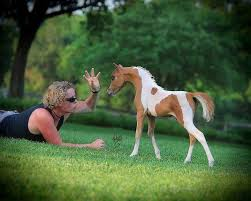 baby mini horse. Brilliant Horse A Little Baby Mini Horse Very Pretty Like A Small Arabian To Horse