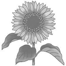 夏の花2ヒマワリ向日葵モノクロ花イラストお花と季節のお礼状