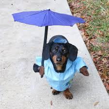 dog rain jacket costume with umbrella