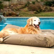 elevated outdoor dog bed – collinalpert