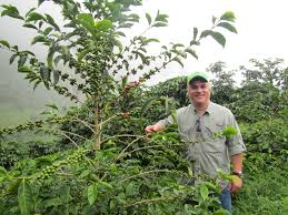 Geisha coffee, sometimes referred to as gesha coffee, is a type of coffee that originated in the village of gesha, ethiopia, though it is grown in several other nations such as colombia. What Is Panama Geisha The Reality Of A Fantasy Bean Perfect Daily Grind