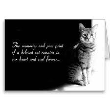 Loss Of A Cat Quotes Inspiration Sympathy Card For The Loss Of A Beloved Pet Cat Zee Zoey's