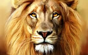 lion head hd wallpaper