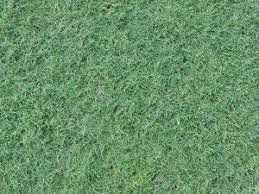 tall grass texture seamless. Lawn With Long Grass Of Consistent Blue-green Color And Full Texture. Tall Texture Seamless