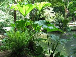 Small Picture tropical garden design ideas GARDENS Gunnera Tropical Garden