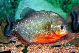 Картинки по запросу ձկների մասին տեղեկություն