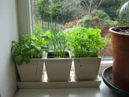 Kitchen Herb Garden Indoor Kitchen Windowsill Herb Garden With Small Pots Indoor Windowsill