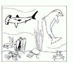 Disegni Da Colorare Animali Marini Img