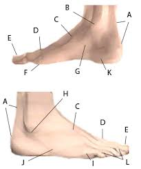 find your foot pain  interactive foot pain finderfind your foot pain