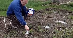 epsom salt gardening. Contemporary Gardening Epsom Salt Garden FI With Epsom Salt Gardening L