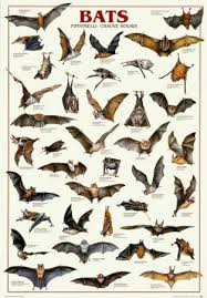 Types Of Bats Chart Bats Why They Are Important And How To Get Bats To Make A