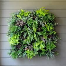 appealing indoor vertical garden on living room with green leaf enchanting design for mounted the gray amazing office plants
