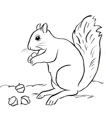 Small Picture Squirrel Coloring Page Samantha Bell Coloring Pages For Kids Image