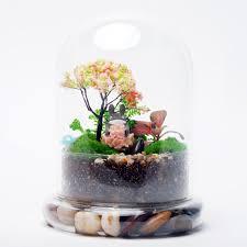 Glass air plant terrarium container