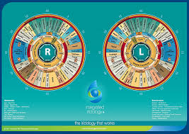 What Is Iridology Chart Iridology Supplies Brio Holistics Llc
