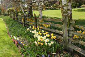 a farm style wooden fence with moss growing on the uneven slats simple planting