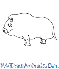 How to draw ox or bull easy steps lesson.tutorial of drawing technique. How To Draw A Musk Ox