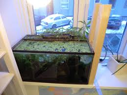 Self Cleaning Fish Tank Garden Build Cheap Aquaponics System