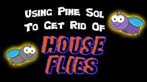 diy using pine sol to get rid of house flies