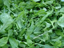 Image result for free image of arugula
