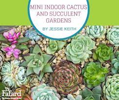 mini indoor cacti and succulent gardens