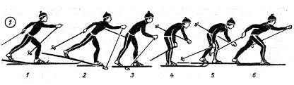 Обучения и совершенствования попеременного двухшажного хода  Обучения и совершенствования попеременного двухшажного хода 5 6 класс