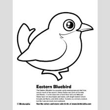 Eastern Bluebird Coloring Page Fun Free Downloads Activity Pages