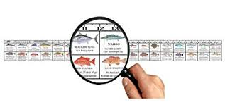 Predator Marine Florida Saltwater Fish Ruler Decal