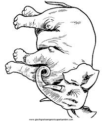 Disegni Da Colorare Di Animali Della Savana Fredrotgans