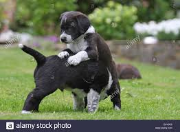 Small Picture Mongrel Puppies Stock Photos Mongrel Puppies Stock Images Alamy