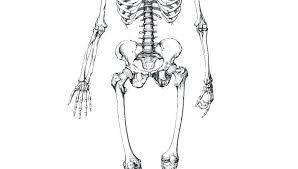 Realistic Dinosaur Bones Coloring Pages Skeleton For Preschoolers