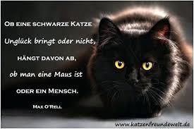 Katzen Bilder Mit Spruchen Crystaljonesco