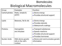 Macromolecules Chart Ap Biology Macromolecule Chart The Image Kid Has It Sand Tray Table