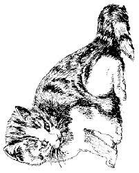 Grote Mensen Kleurplaten Katten Kids N Fun De 68 Ausmalbilder Von