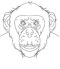 Small Picture Chimpanzee Face Coloring Page Chimpanzee Face Coloring Page