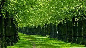 Green Nature Wallpaper - Hd Wallpaper ...
