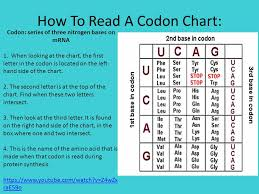 How To Read The Genetic Code Chart