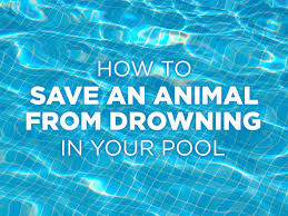 animal pool safety how to prevent an animal from drowning in your pool peta