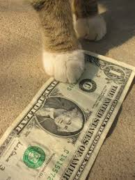 Why is veterinary care so expensive?