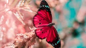 Download Wallpaper Laptop Hd Butterfly ...