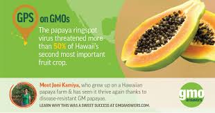 social tile gps on gmos papaya rin virus