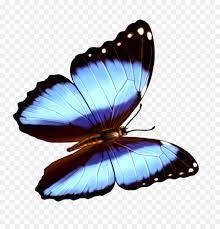 Butterfly Transparenz und Transluzenz ...