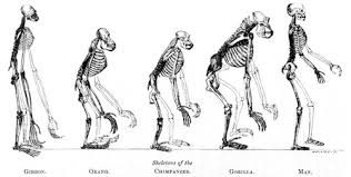 missing link – wallace  huxley  darwinevolution of man