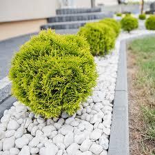 lawn border edging ideas ideas for