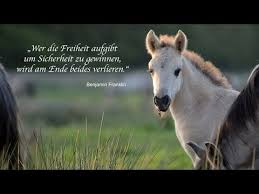 Die Seele Der Pferde Ehorsesde