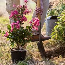 how to garden gardening basics for