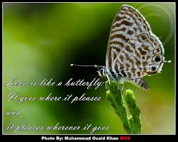 Butterfly Beauty Quotes Best of Butterflies Pictures Images Page 24